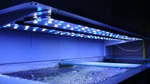 eclairage led pour aquarium eau de mer aquarium eau de mer led