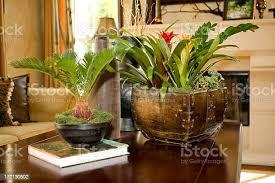 wohnzimmer mit vielen pflanzen stockfoto und mehr bilder bildschärfe