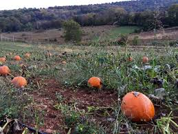Piedmont Service Center Pumpkin Patch by Explore Sky Meadows State Park In Northern Virginia