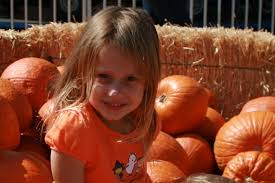 Shawns Pumpkin Patch Hours by Where To Get Pumpkins In Los Angeles Cbs Los Angeles
