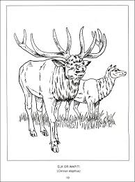 Proddtl Php Inspiration Web Design Wildlife Coloring Books