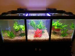 Spongebob Fish Tank Decorations by Divided Betta Tank Betta Tank Betta And Fish