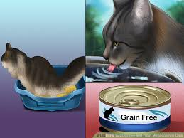 cisapride for cats 3 ways to diagnose and treat megacolon in cats wikihow