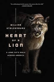 Heart Of A Lion Lone Cats Walk Across America Encore Presentation