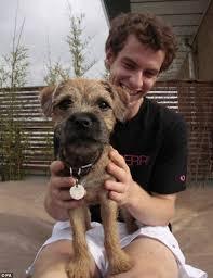 Do Border Terriers Shed by Country Life Declare Border Terriers Are The Ideal Canine