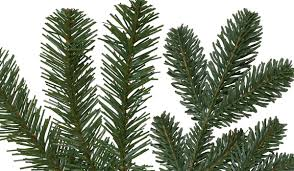 Lifelike Artificial Christmas Trees Canada by How To Buy An Artificial Christmas Tree Christmas Tree Market