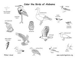 Coloring Birds Of This State Alabama