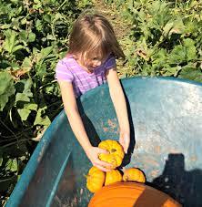 Pumpkin Patch Omaha by Pumpkin Patch 2014 Living A Sunshine Life