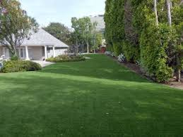 Carpet Grass Florida by Outdoor Carpet Butler Beach Florida Watch Dogs Landscaping Ideas