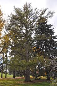 Jefferson County Co Christmas Tree Permits by Co Horts November 2013