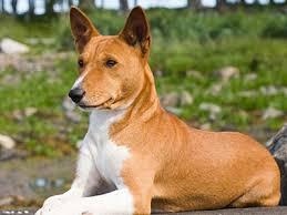 low shedding dog breeds low shedding dog list