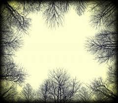 l arbre a cadre branches d arbres cadre photo stock libre domain pictures