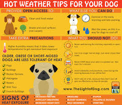 Too Much Pumpkin For Dogs Diarrhea by Does Your Puppy Seem To Eat Everything U2013 Grass Dirt Sticks
