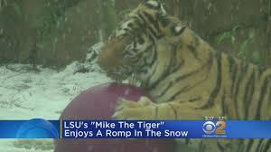 100 Tiger Truck Stop Louisiana Rare Snowfall Makes For S Fun YouTube