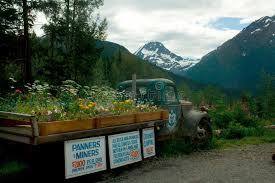 Download Old Truck With Flowers In Bed And Signs Alaska Editorial Stock Photo