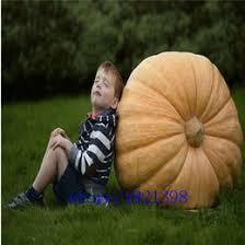 Atlantic Giant Pumpkin Taste by Giant Pumpkin Seeds Canada Best Selling Giant Pumpkin Seeds From