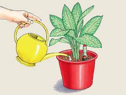 erfolg mit zimmerpflanzen in hydrokultur gartenflora