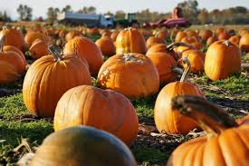 Stoney Ridge Pumpkin Patch Bellingham Wa by Places To Visit This Fall In Washington