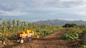 Pumpkin Patch Reno by Charming Pumpkin Patches In Nevada Are Picture Perfect For A Fall Day