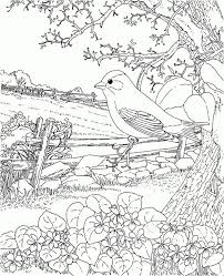 Glamorous Bird Coloring Pages For Adults 1 Best 25 Ideas That You Will Like On Pinterest