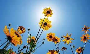 la lumière du jour peut aider à perdre du poids à voir