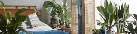schlafzimmer pflanzen bakker