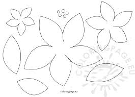 Poinsettia Flowers Patterns
