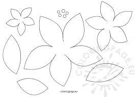 Poinsettia Flowers Patterns