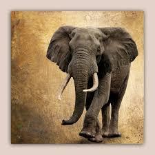 elefant auf metalltextur leinwandbild collage wandbild