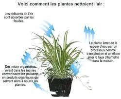 plante verte dans une chambre à coucher quelle plante pour une chambre comment aa marche quelle plante