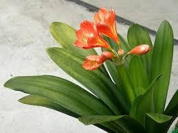 plantes vertes d interieur plantes d intérieur soins et conseils