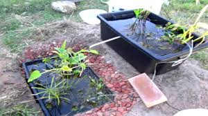 DIY Frog Pond - YouTube Frog Lodge Gabe Feathers Mcgee The Whisper Folks How To Create A Wildlife Pond Hgtv Building Ogfriendly Build On Budget Youtube Backyard Home Landscapings Ideas Garden Diy Project Full Video To Make Chickadee Habitat Design And Build Wildlife Pond Saga For Frogs Part 5 Outdoor Patio Cute Round Koi Mixed With