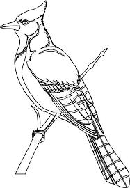 293 Best School Birds Images On Pinterest