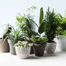 pflanzen fürs bad diese 7 pflanzen eignen sich perfekt