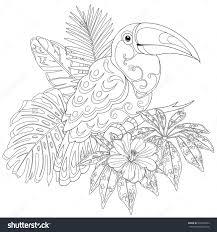 Livre De Coloriage Toucan Illustration De Vecteur Illustration