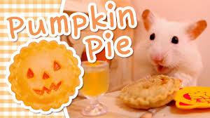 Can Rabbits Eat Pumpkin Seeds by Pumpkin Pie Hamster Kitchen Youtube