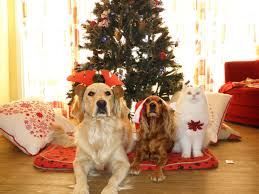 Are Christmas Tree Needles Toxic To Dogs by Keep Your Pets Safe This Holiday Season U2026by Mike Gallagher