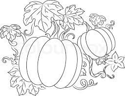 Pumpkin Vine Drawing Pumpkin Vine Drawing pin