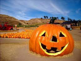 Pumpkin Patch In San Fernando Valley by Losangelesloveaffair Los Angeles Love Affair Page 14