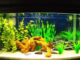 Spongebob Fish Tank Ornaments Uk by Fake Plants But Still Looks Good Fish Tank Pinterest Fake