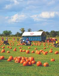 Pumpkin Patch Near Austin Tx by Our 5 Favorite Pumpkin Picking Patches For The Fall Houstonia