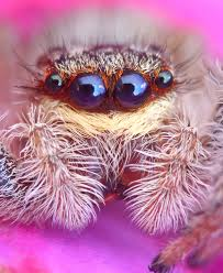Do Tarantulas Shed Their Fangs by All About Spiders Welcome Wildlife