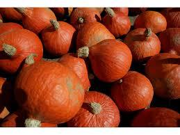 Carmichaels Pumpkin Patch Oklahoma by Pumpkin Patches And Hayrides Around Tulsa Kjrh Com