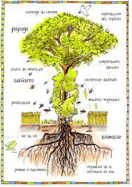 l arbre a cadre haies vives d alsace association de promotion de l arbre chêtre