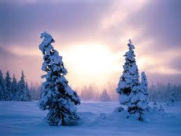 Mountain King Christmas Trees 9ft by All Stuff 4 U All Christmas Trees