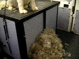 do haired akitas shed akita puppy de shed grooming 2 3
