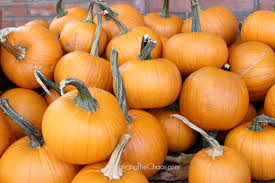 Pumpkin Patch Irvine University by Orange County Pumpkin Patches U0026 Fall Family Fun Balancing The Chaos