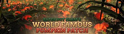 Pumpkin Patch Fresno Ca Hours by Delicious Nuts From All Over The World Agriculture U0026 Farming
