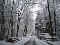 100 Moster Milk Truck Photos Snowy Winter Woods 2016 Cora Buhlert
