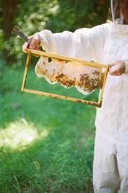 Stupid-Easy Beekeeping: Part 1 | Beekeeping, Homestead Gardens And ... Hive Time Products A Bee Adventure For Everyone Bkeeping Everything You Need To Know Start Your First Best 25 Raising Bees Ideas On Pinterest Honey Bee Keeping The Bees In Your Backyard Guide North Americas Joseph Starting Housing And Feeding Top Bar Beehive Projects Events Level1techs Forums 562 Best Images Knees 320 Like Girl 10 Mistakes New Bkeepers Make Splitting Hives Increase Cookeville Bkeepers Nucleus Colony Or How A 8 Steps With Pictures